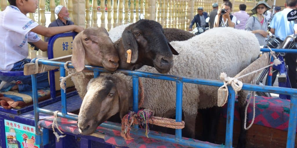 Sunday Bazaar, Kashgar, China