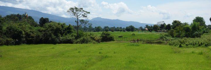 Rice field, Laos
