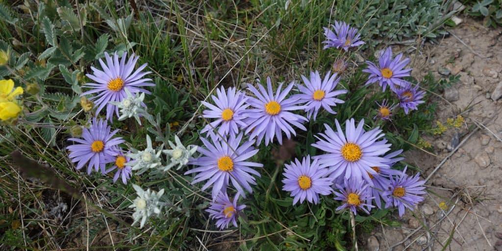 Wildflowers, Kyrgyzstan