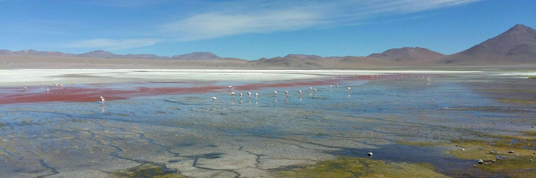 Flamingos in the Bolivian Altiplano near Uyuni, Bolivia