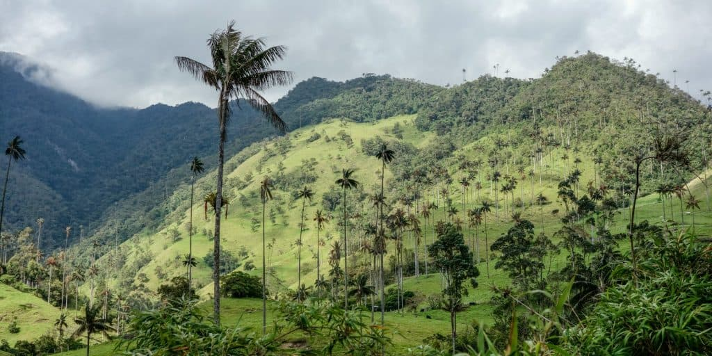 Palm trees in Cocora Valley, Colombia